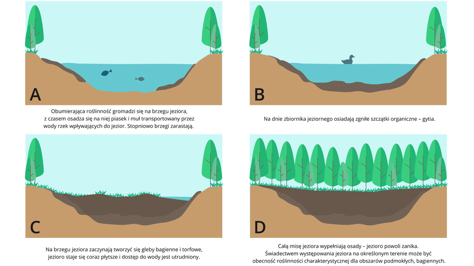 Etapy zarastania jeziora