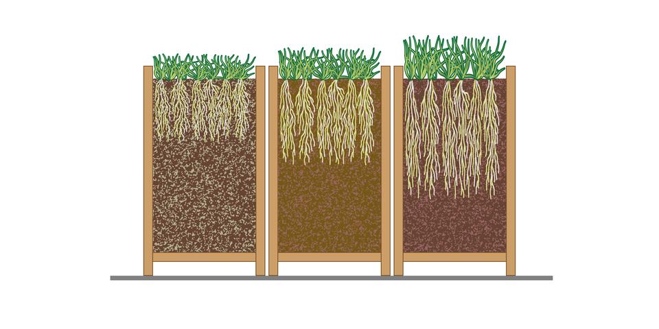 Ilustracja przedstawia trzy pojemniki, wktórych rosną kępy traw. Pojemniki narysowano wprzekroju, żeby przedstawić korzenie roślin. Wpierwszym od lewej podłoże jest ciemnobrązowe izlicznymi szarymi ziarnistościami. Korzenie są krótkie. Wśrodkowym pojemniku podłoże jest jasne, ziarnistości mniej widoczne, korzenie sięgają głębiej. Wtrzecim pojemniku podłoże jest ciemne, ziarnistości mało widoczne. Korzenie są najdłuższe.