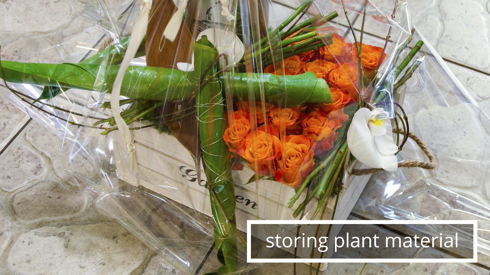 The picture shows one of the methods of storing plant material and preparing for its transportation.Rysunek przedstawia jeden ze sposobów przechowywania iprzygotowania do przewiezienia materiału roślinnego.