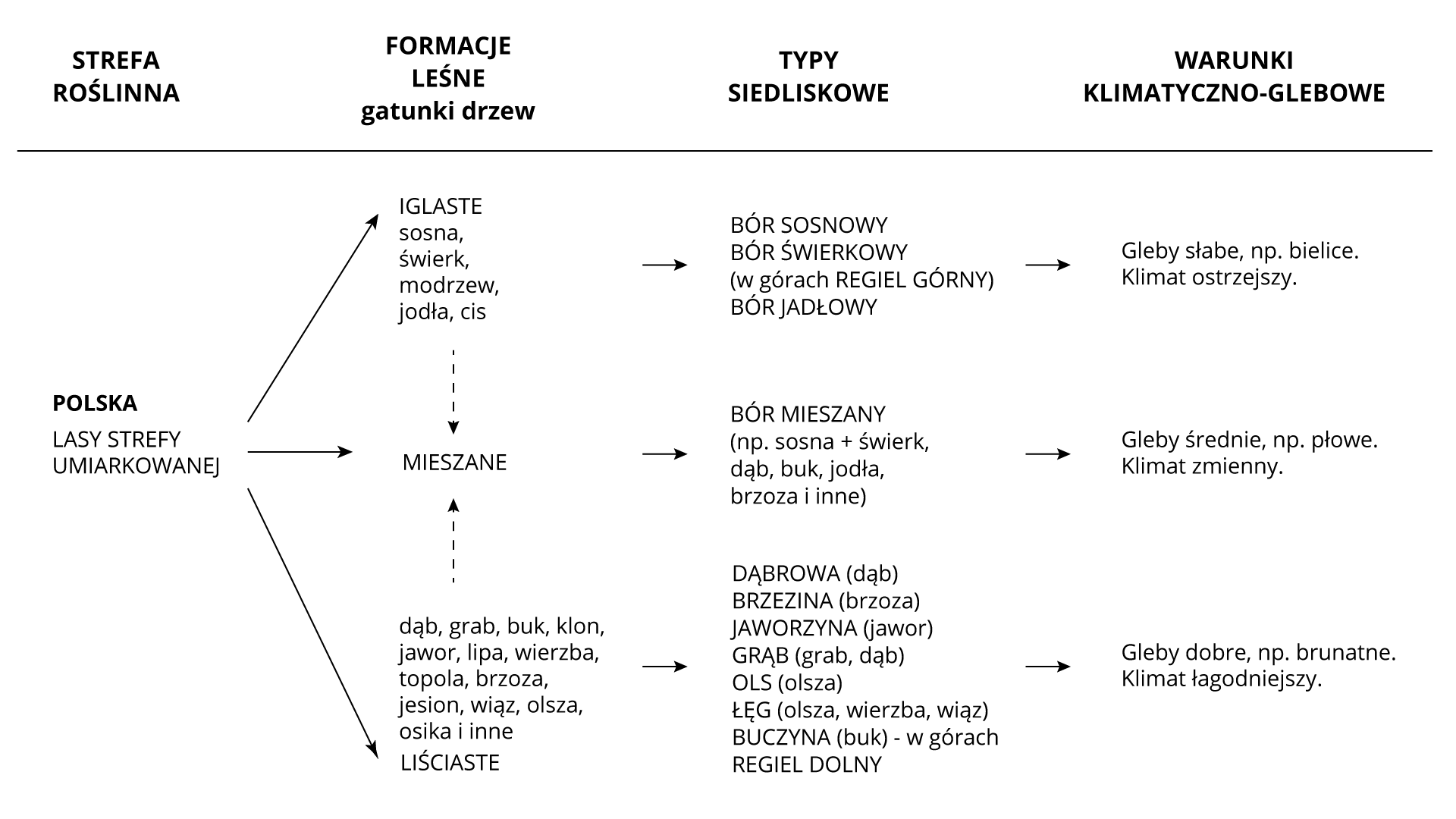 Na ilustracji schemat zależności między klimatem, glebami itypami lasów wPolsce.   Strefa roślinna Formacje leśne/gatunki drzew Typy siedliskowe Warunki klimatyczno-glebowe   Polska/Lasy strefy umiarkowanej  iglaste/ sosna, świerk,modrzew, jodła, cis bór sosnowy bór świerkowyw górach regiel górnybór jodłowy gleby słabe, np. bieliceklimat ostrzejszy   mieszane bór mieszanynp. sosna+świerk, dąb, buk,jodła, brzoza iinne gleby średnie, np.płoweklimat zmienny   liściaste/dąb, grab, buk, klon,jawor, lipa, wierzba,topola, brzoza, jesion,wiąz, olsza, osika  dąbrowa (dąb)brzezina (brzoza)jaworzyna (jawor)grąb (grab, dąb)ols (olsza)łęg (olsza, wierzba, wiąz)buczyna (buk) – wgórachregiel dolny gleby dobre, np.brunatneklimat łagodniejszy
