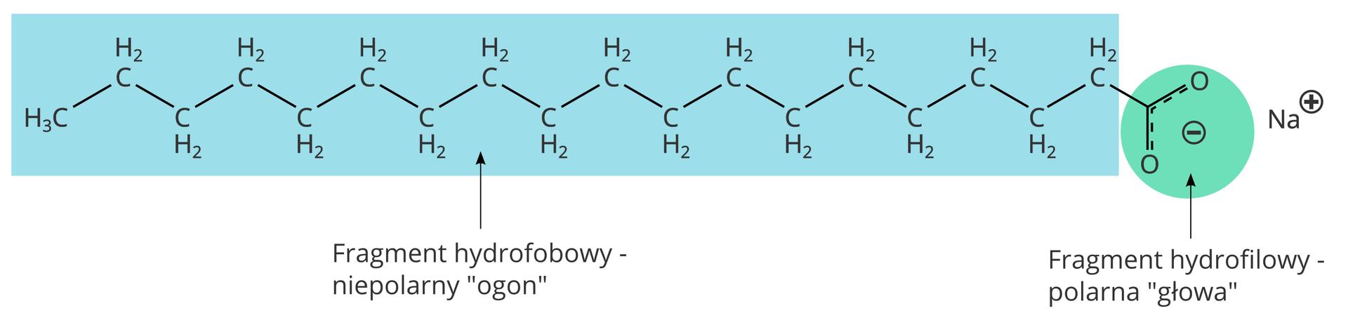 Wzór strukturalny stearynianu sodu (mydła)