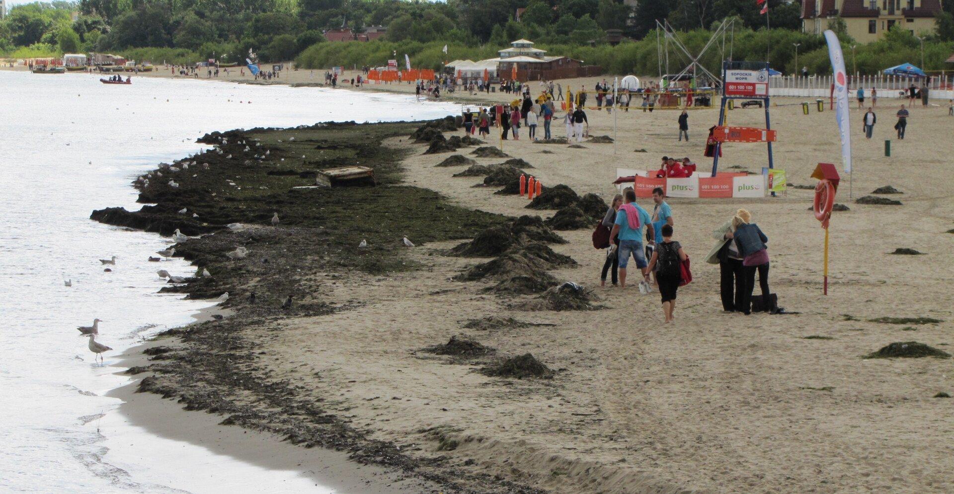Na zdjęciu zanieczyszczenia na plaży, ciemniejsze plamy. Zanieczyszczenia zagrabione na stosy.
