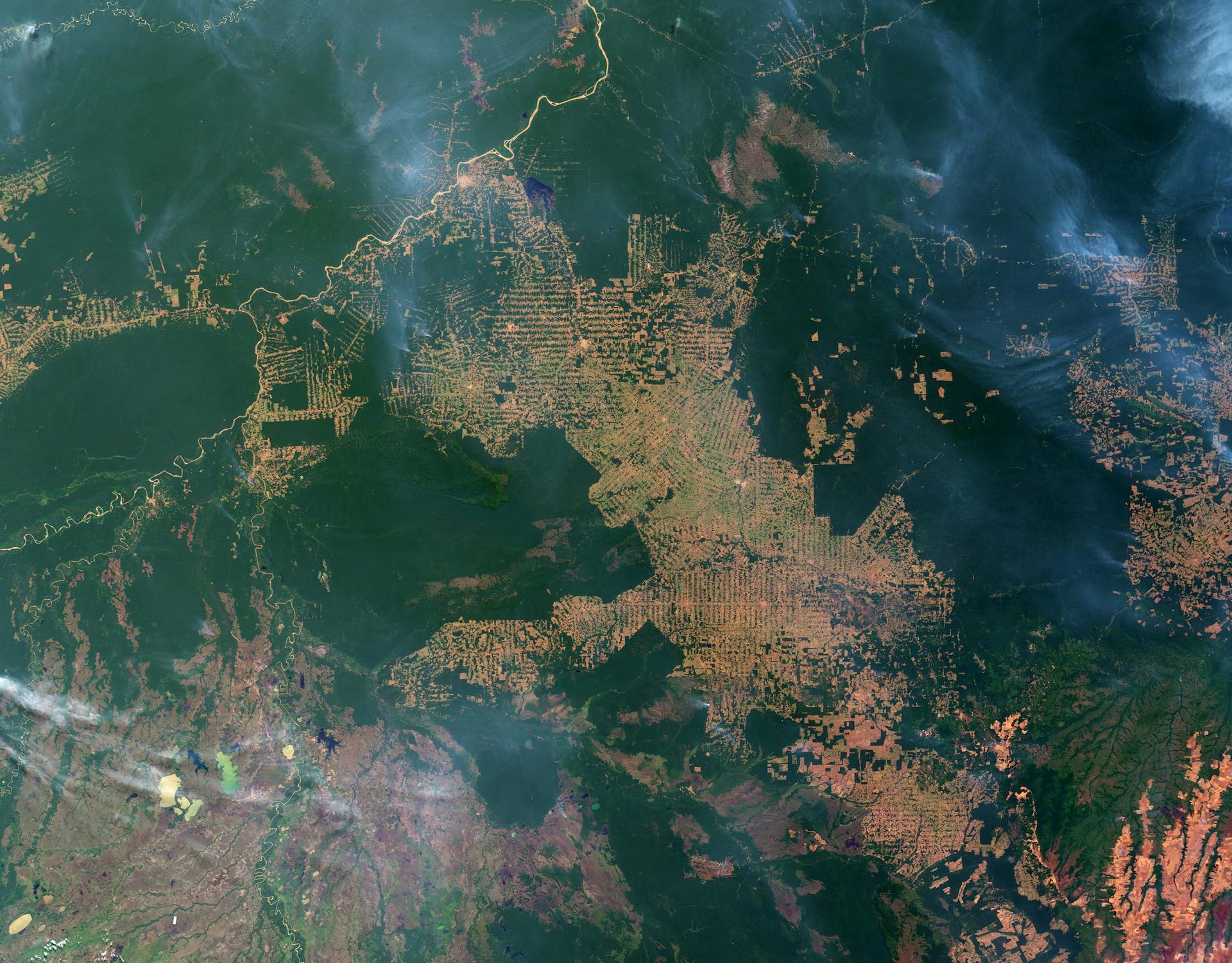 Zdjęcie satelitarne fragmentu Amazonii. Na zdjęciu obszary zielone to wilgotny las równikowy, natomiast obszary żółte to tereny, gdzie las został wycięty.