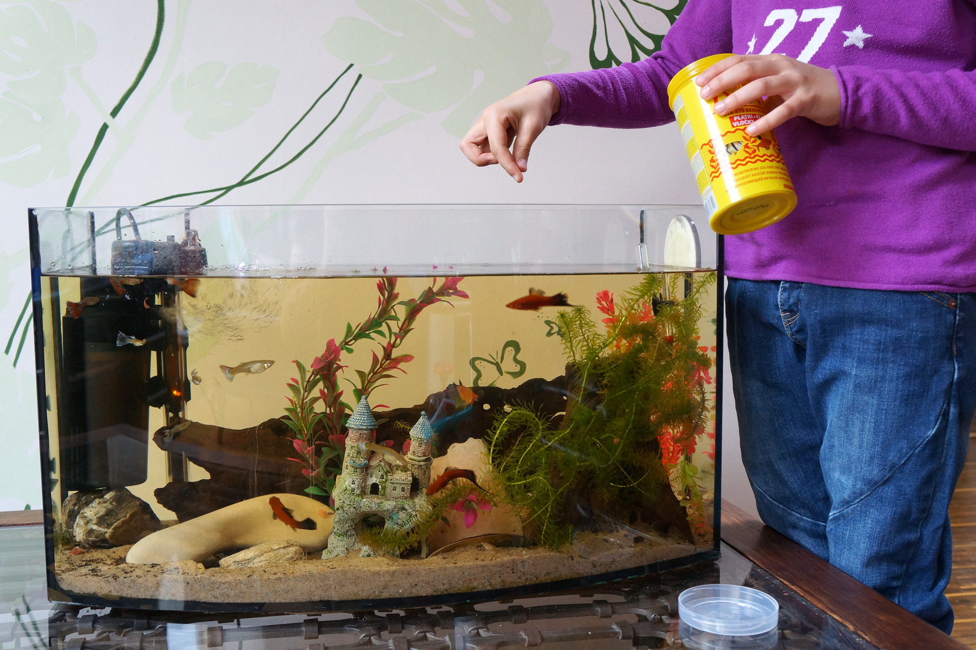 Slajd 5 – prezentuje niewielkie akwarium, do którego opiekun sypie pokarm.