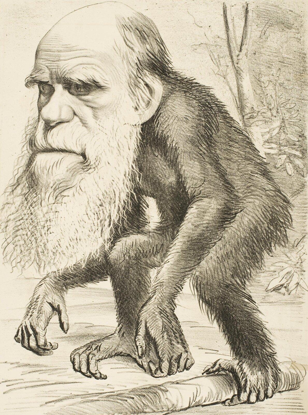 Karykatura Karola Darwina Karykatura Karola Darwina Źródło: 1871, domena publiczna.