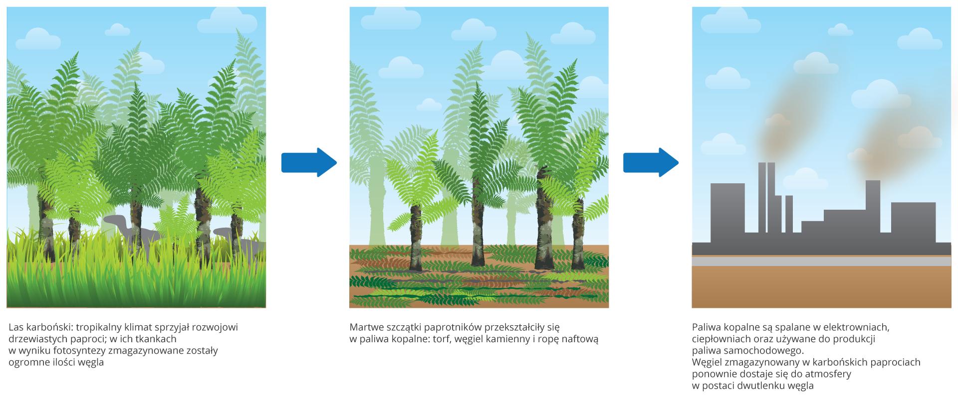 Ilustracja składa się ztrzech rysunków, ukazujących magazynowanie iuwalnianie dwutlenku węgla. Na pierwszym obrazku znajdują się zielone drzewiaste paprocie, między którymi wwysokiej trawie chodzą szare dinozaury. To las karboński. Rośliny wciepłym klimacie pobierają dwutlenek węgla zatmosfery iprowadzą intensywną fotosyntezę. Wich tkankach magazynowane są duże ilości węgla. * Drugi rysunek ukazuje tylko kilka żywych roślin. Szczątki pozostałych powoli przekształcają się wpaliwa kopalne: torf, węgiel brunatny ikamienny oraz ropę naftową. Na trzecim rysunku znajduje się szara fabryka. Zjej kominów wydostaje się bury dym. Paliwa kopalne są zużywane, azmagazynowany węgiel wpostaci dwutlenku węgla wraca do atmosfery.