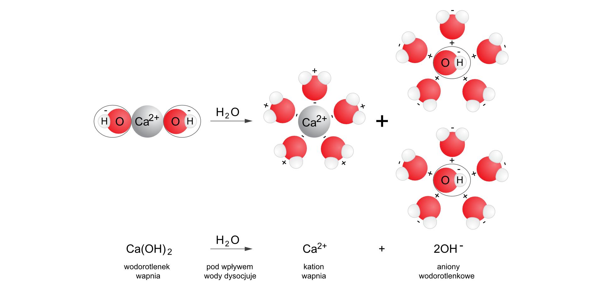 Ilustracja przedstawia proces dysocjacji elektrolitycznej wodorotlenku wapnia. Wdolnej części zapis sumaryczny reakcji rozbijania wodorotlenku wapnia Ca OH dwa razy wzięte na jon Ca dwa plus oraz dwa jony OH minus pod wpływem wody. Zapisowi towarzyszy opis słowny. Ponad równaniem znajduje się ilustracja wpostaci zapisu modelowego. Przedstawia model cząsteczki wodorotlenku wapnia, wktórym duża szara kula opisana jako Ca dwa plus połączona jest po obu bokach zukładami OH minus, gdzie tlen przedstawia średnia kula czerwona, awodór mała kula biała. Następnie, po prawej stronie strzałki reakcji znapisem H2O znajdują się trzy układy zbudowane zjonów oraz otaczających każdy jon sześciu cząsteczek wody. Pojedynczy kation Ca dwa plus otaczają cząsteczki zwrócone stroną naładowaną dodatnie na zewnątrz układu, adwa aniony OH minus otaczają cząsteczki zwrócone stroną naładowaną dodatnie do wnętrza układu.