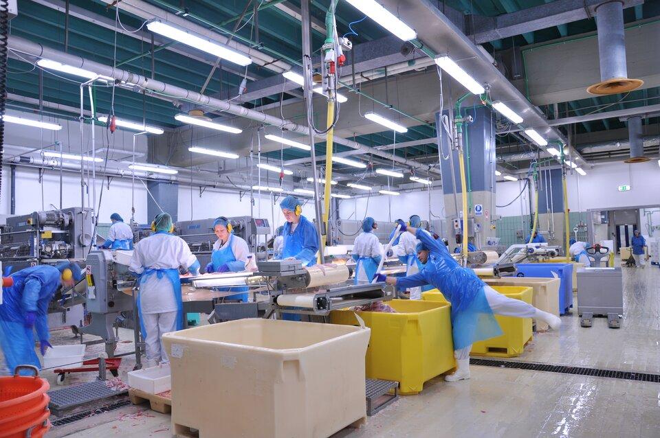 Na zdjęciu wnętrze hali. Pracownicy wstrojach roboczych, foliowych fartuchach, rękawiczkach, czepkach inausznikach uczestniczą wprocesie przygotowywania ipakowania ryb. Różne urządzenia, podajniki folii, duże prostopadłościenne kadzie.