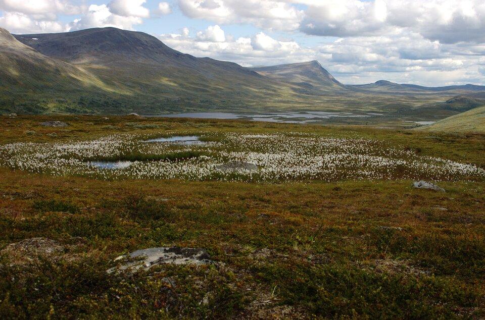 Na zdjęciu rozległy płaskowyż otoczony górami. Liczne rozlewiska. Skąpa roślinność trawiasta. Drobne kwiaty.