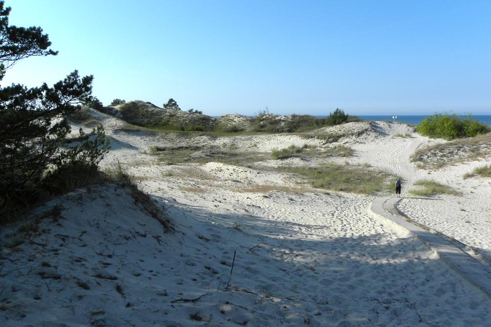 Fotografia prezentuje wydmy nadmorskie, powstałe na skutek działalności wiatru.