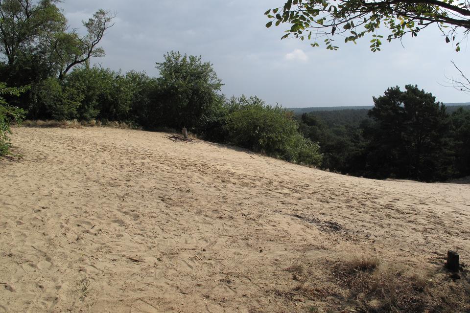 Na zdjęciu piaszczysty teren, dookoła las.