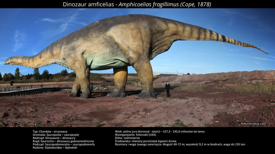 Na zdjęciu model dinozaura. Wielkość modelu to około sześćdziesiąt metrów długości idziesięć metrów wysokości. Mała głowa, duży tułów, bardzo długi ogon. Obok modelu stoi człowiek, sięga do jednej trzeciej wysokości nogi modelu dinozaura. Na pierwszym planie błotnista powierzchnia, wtle zabudowania. Błękitne niebo.