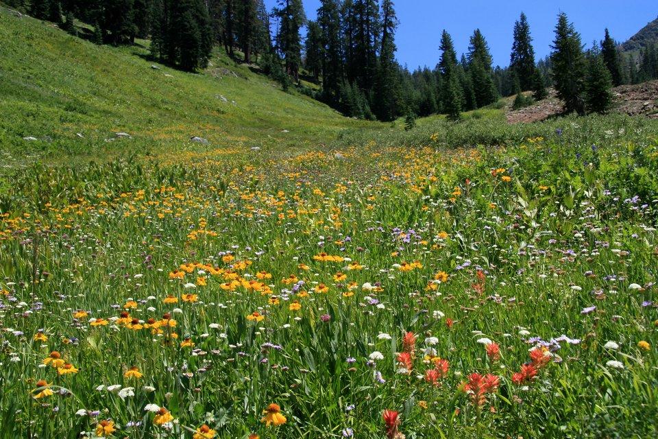 Zdjęcie przedstawia łąkę zdużym udziałem kwitnących roślin zielnych. Kolory kwiatów to biały, żółty iróżowy. Wtle znajduje się świerkowy las.