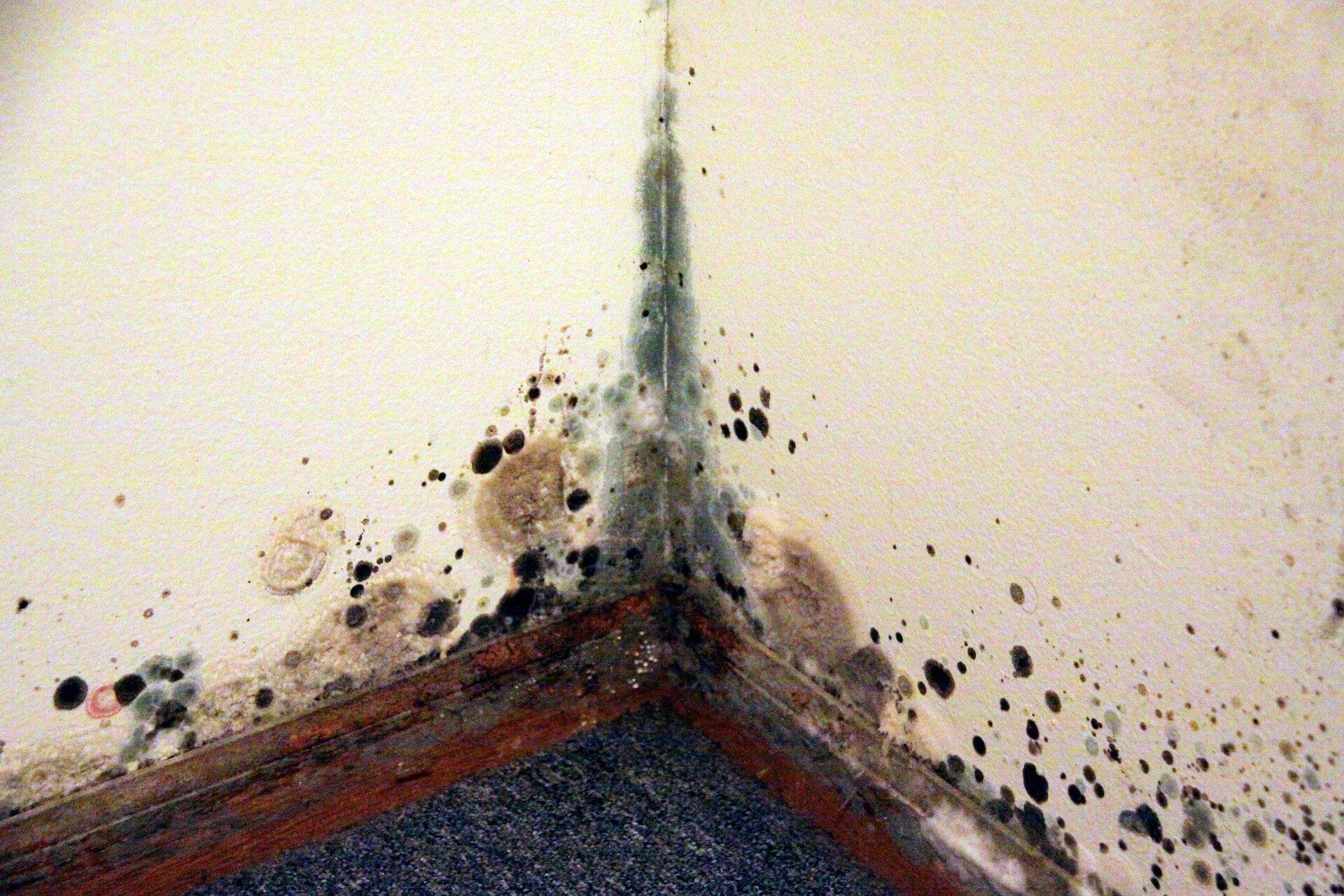 Fotografia przedstawia zawilgoconą ścianę pokrytą pleśnią.