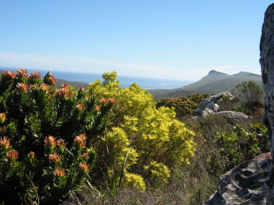 Fynbos – lokalna nazwa krzaczastych zarośli na południowym wybrzeżu Afryki, które są odpowiednikiem śródziemnomorskiej makii