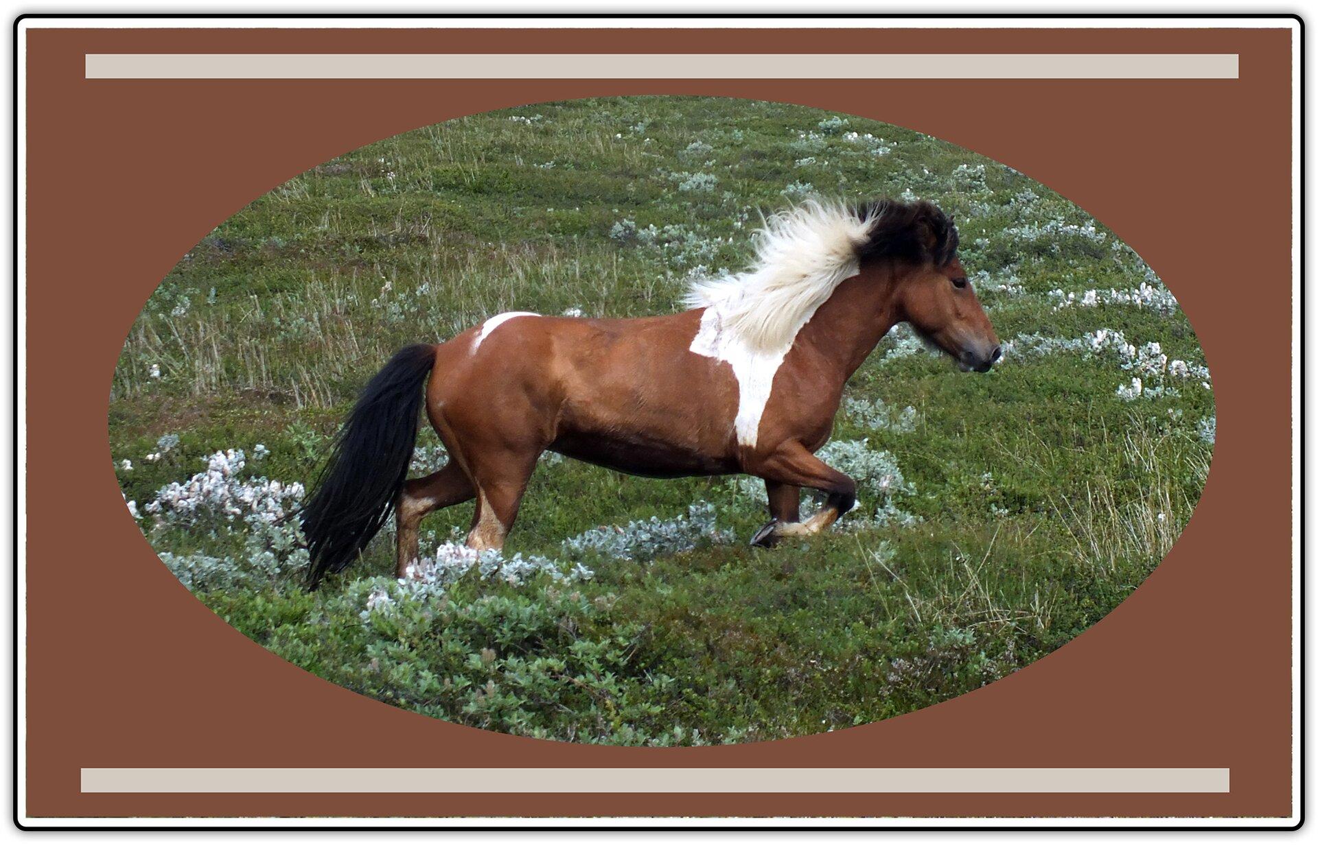 Fotografia przedstawiająca biegnącego konia po łące