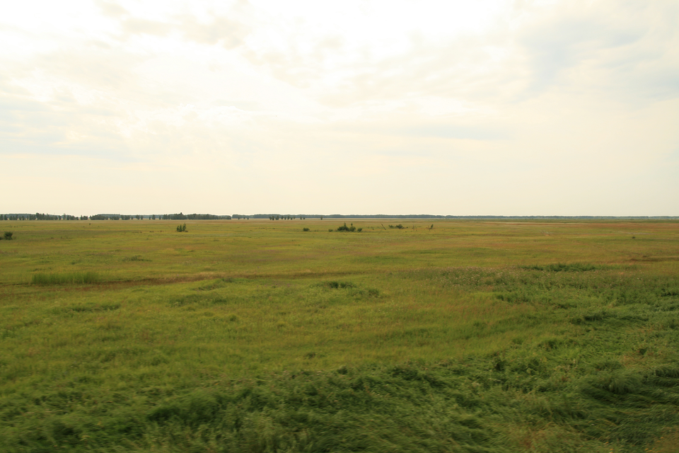 Fotografia przedstawia rozległą trawiastą równinę. Woddali nieliczne kępy zarośli. To step na Syberii.