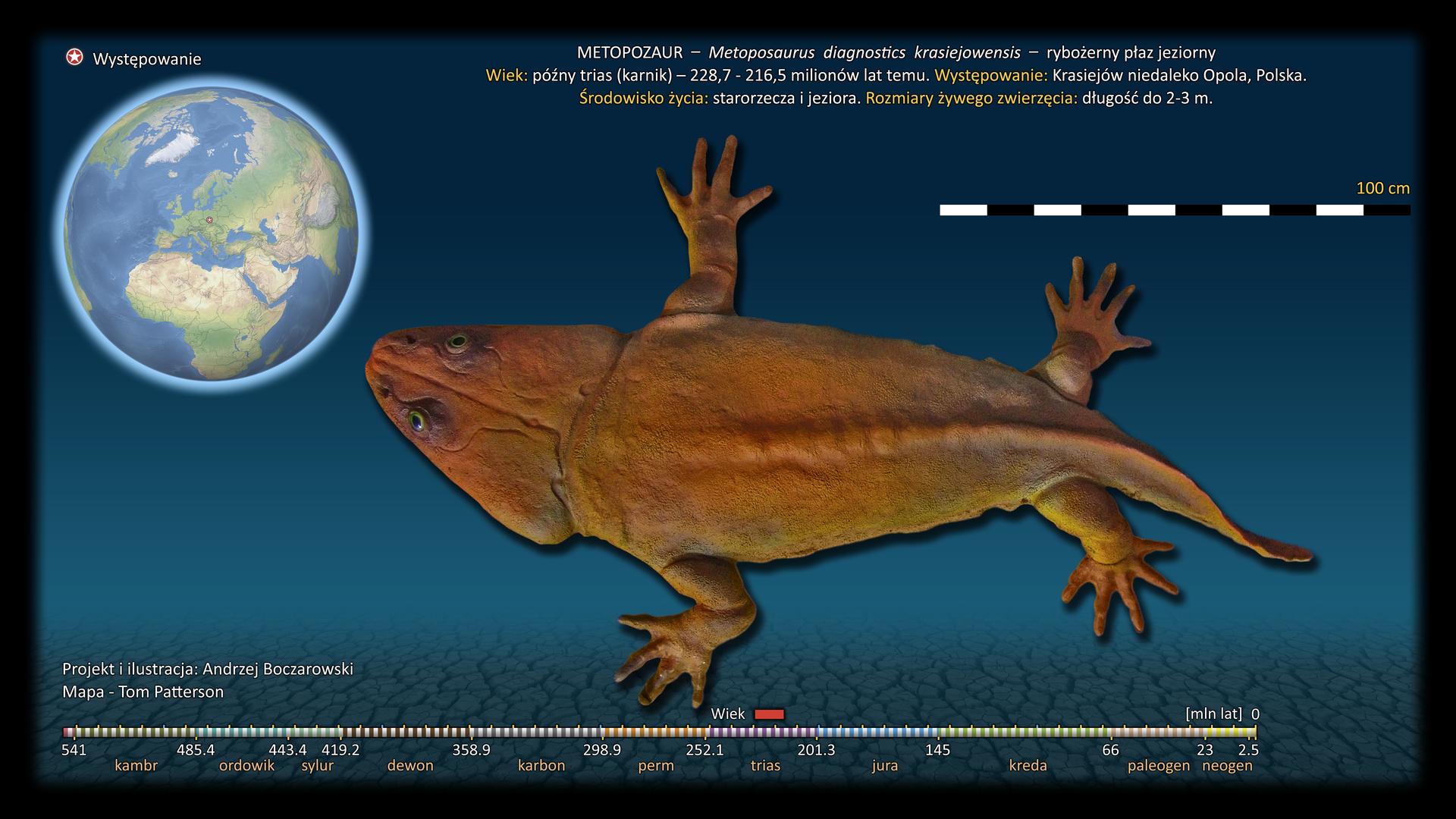 Ilustracja wymarłego zwierzęcia – metopozaura. Zwierzę ma dużą głowę długą na jedną czwartą długości ciała. Ciało jest płaskie, szerokie zprzodu izwężające się ku tyłowi. Kończy się krótkim ogonem. Kończyny są krótkie iczteropalczaste.
