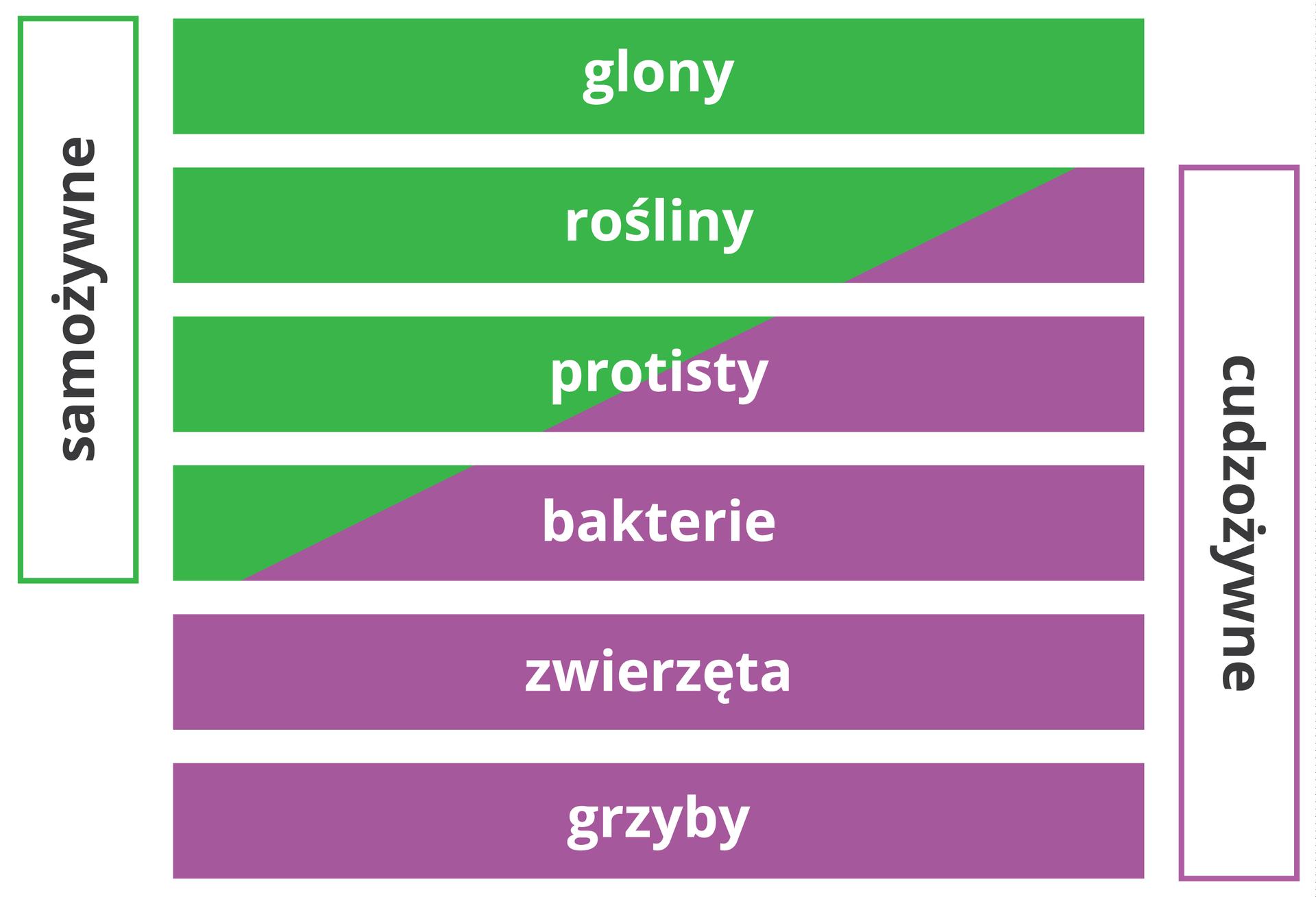 Schemat pokazuje prop zwierzeta igrzybyorcje organizmów samo- icudzozywnych. Samożywne są glony. Wśród roślin, protistów ibakterii są organizmy samo- icudzożywne. Cudzożywne są zwierzeta igrzyby.