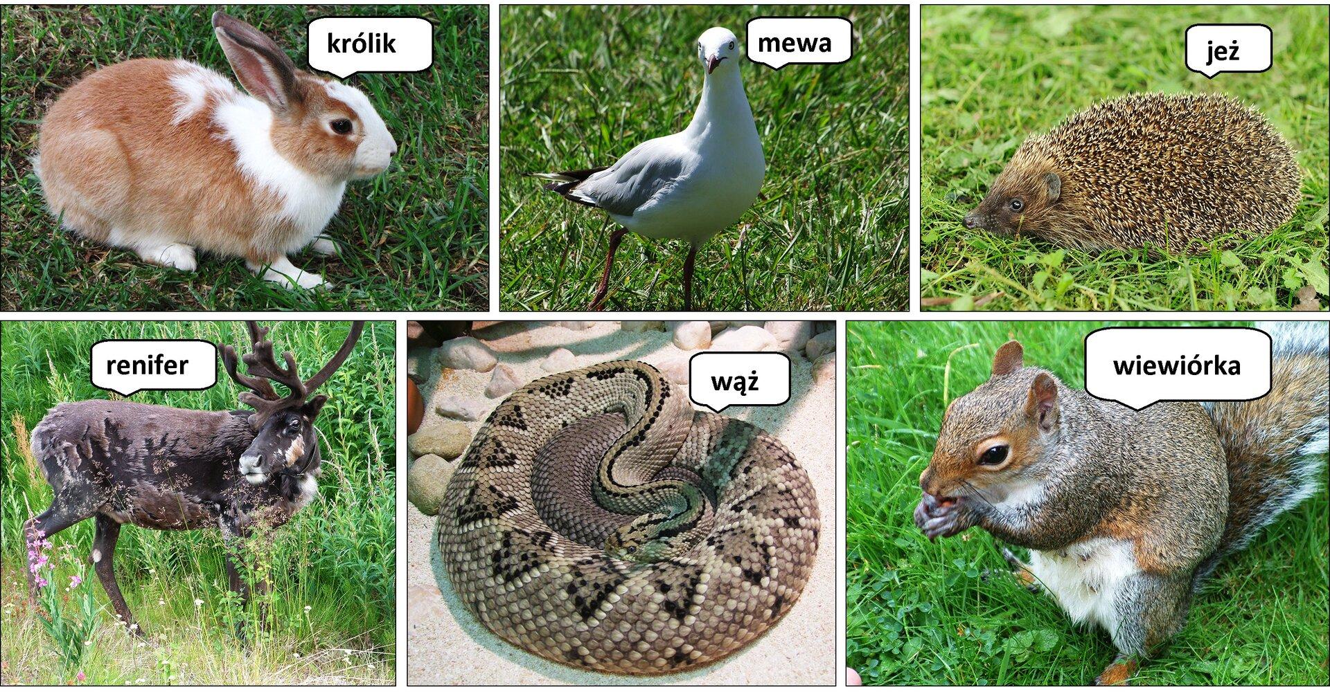 Fotografia przedstawiająca różne gatunki zwierząt zpodpisami