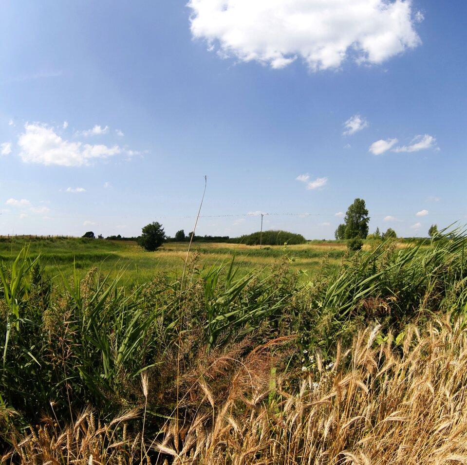 Rezerwat Owczary panorama interaktywna