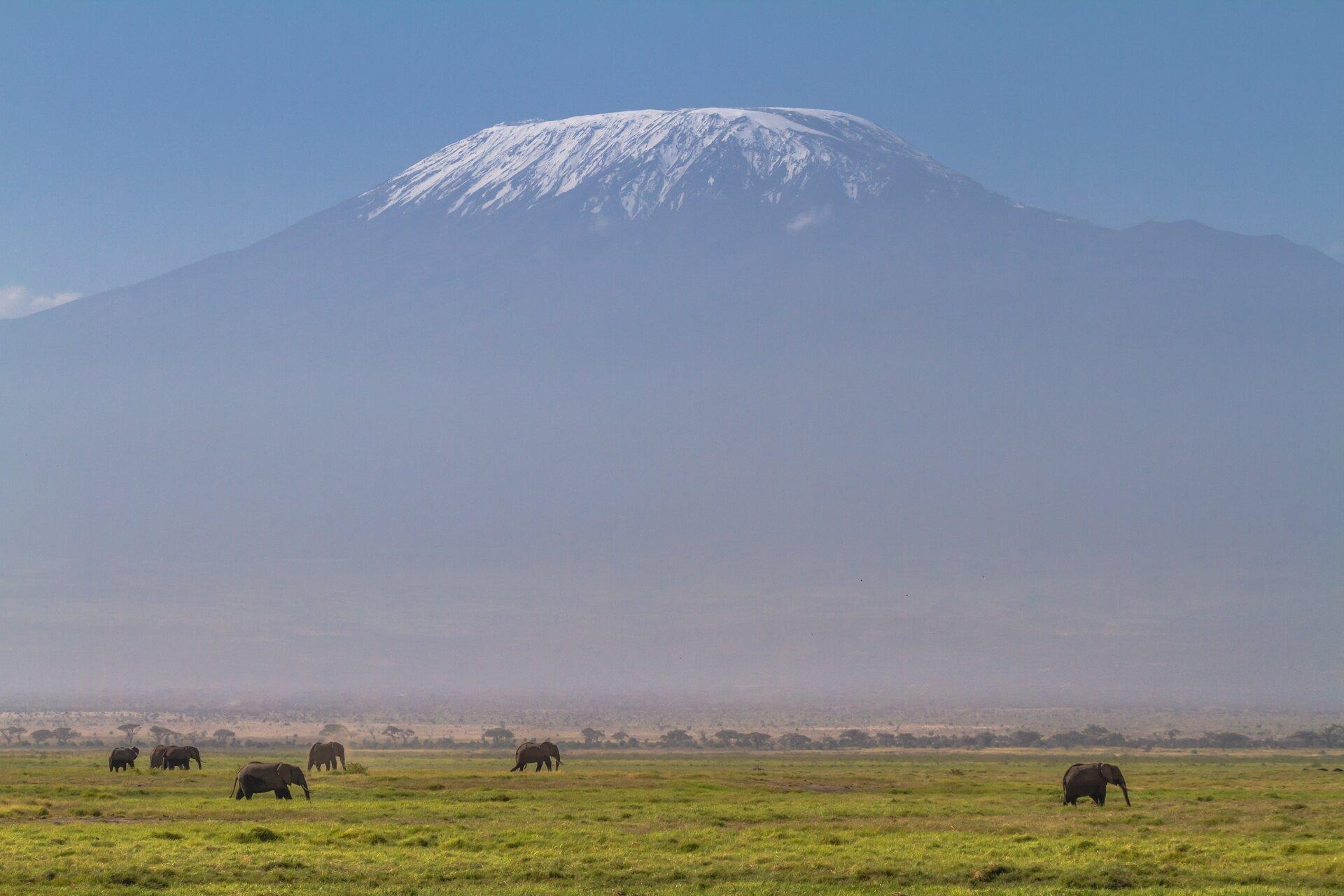 Zdjęcie przedstawia górę Kilimandżaro. Słoneczny dzień. Na pierwszym planie zielone liściaste drzewa ikrzewy gęsto porastające teren. Na drugim planie wysoki szczyt góry. Skalisty szczyt pokryty śniegiem. Góra wkształcie trapezu. Szczyt rozciąga się poziomo bez wyraźnego osobnego wierzchołka. Niebo błękitne.