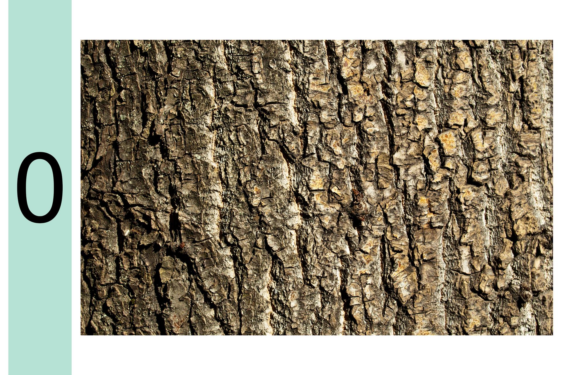 Fotografia przedstawia zbliżenie pnia drzewa. Zlewej cyfra 0. Na korze nie ma żadnych porostów ani glonów. Oznacza to, że powietrze jest szczególnie silnie zanieczyszczone.
