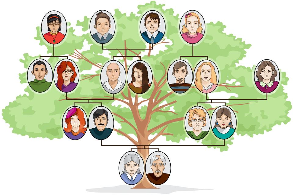 Ilustracja ukazująca drzewo genealogiczne