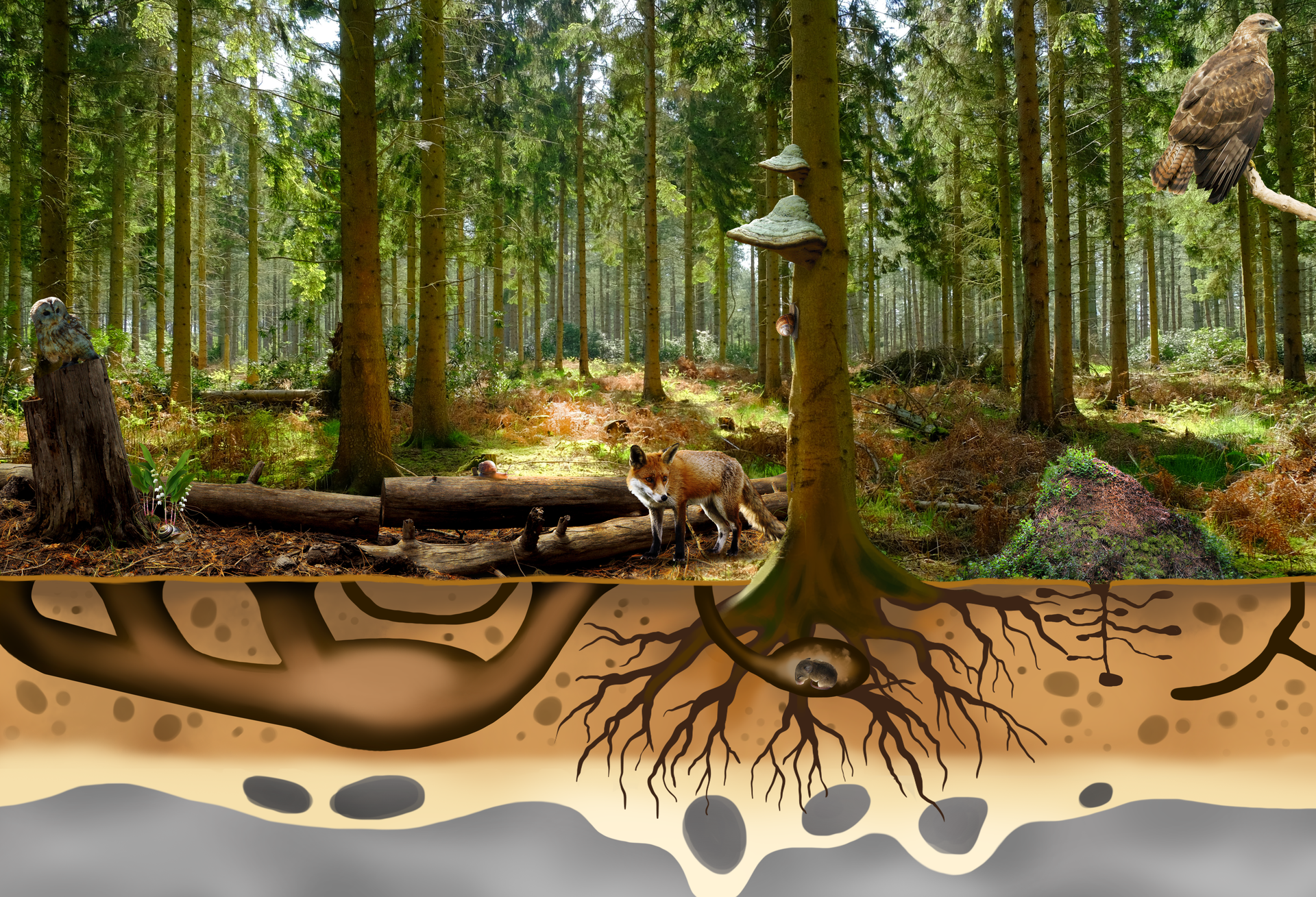 Grafika przedstawiająca żywe inieożywione elementy ekosystemu