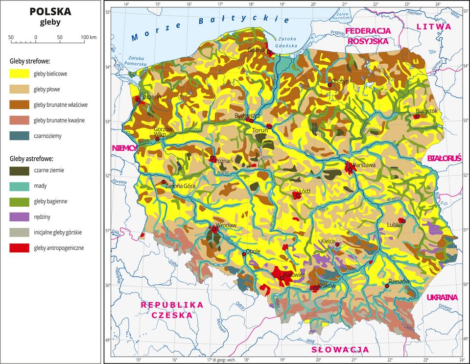 Ilustracja przedstawia mapę Polski . Na mapie kolorami zaznaczono typy gleb. Centralną część Polski zajmują gleby bielicowe oznaczone kolorem żółtym igleby płowe oznaczone kolorem beżowym. Na północy przeważają gleby brunatne właściwe ikwaśne oznaczone dwoma odcieniami koloru brązowego. Wzdłuż rzek występują mady (kolor turkusowy) igleby bagienne (kolor zielony). Czerwonymi kropkami zaznaczono miasta wojewódzkie. Opisano rzeki. Po lewej stronie mapy wlegendzie umieszczono wpionie jedenaście kolorowych prostokątów, które opisano nazwami gleb. Wydzielono pięć rodzajów gleb strefowych: bielicowe, płowe, brunatne właściwe, brunatne kwaśne iczarnoziemy oraz sześć rodzajów gleb astrefowych: czarne ziemie, mady, gleby bagienne, rędziny, inicjalne gleby górskie igleby antropogeniczne. Gleby astrefowe rozmieszczone są nierównomiernie, gleby antropogeniczne występują wokół miast.