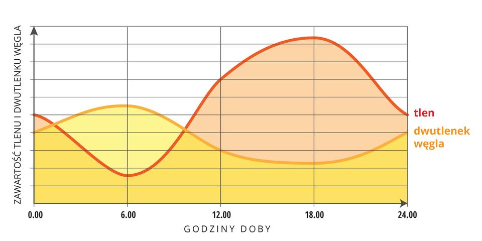 Ilustracja przedstawia wykres zmian zawartości gazów wwodzie wciągu doby. Oś Ypodpisano: zawartość tlenu idwutlenku węgla, na osi Xzaznaczono godziny doby od 0 do 24, wpodziale co sześć godzin. Tlen oznaczono kolorem różowym, adwutlenek węgla pomarańczowym. Wykresy dla obu gazów częściowo na siebie zachodzą, co przedstawiono kolorem ciemno żółtym.stawu