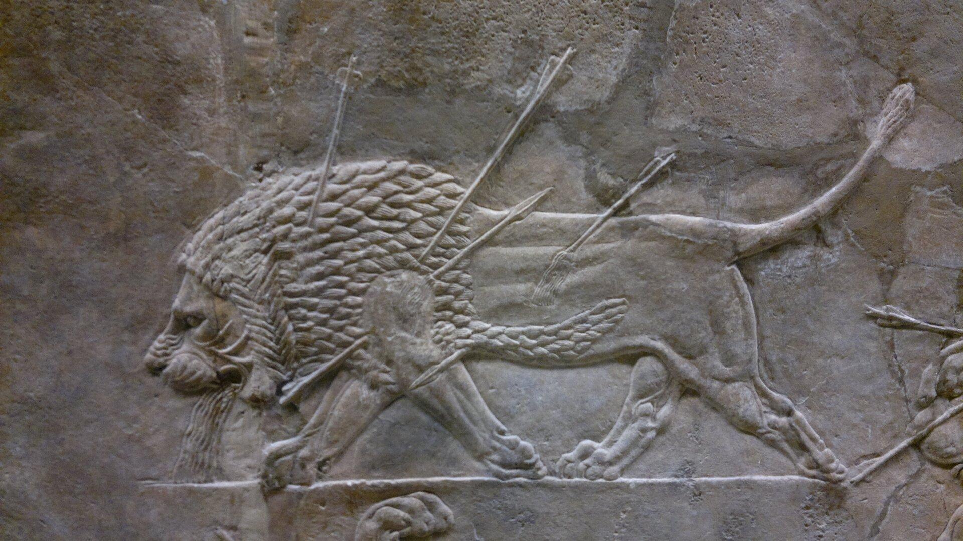 """Ilustracja przedstawia relief """"Umierający lew"""" zpałacu Asurbanipal. Ukazuje lwa, wktórego ciele znajdują się strzały. Zwierzę ostatnimi siły podąża naprzód, ma pochylony łeb, zbuzi ciekną mu strugi krwi."""