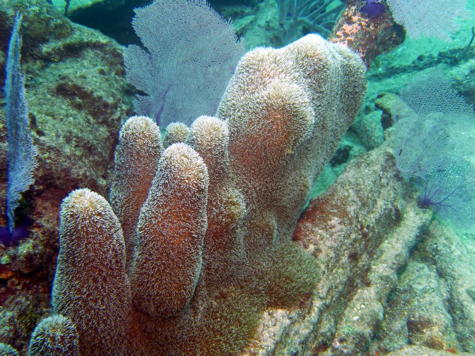 Wgalerii znajdują się fotografie przedstawiające bogactwo życia na rafie koralowej. Fotografia przedstawia duże zbliżenie korala madreporowego wkształcie różowych walców zwysuniętymi, białymi ramionami. Oznacza to, że jamochłon żeruje. Obok znajdują się koralowce wkształcie ażurowych wachlarzy.