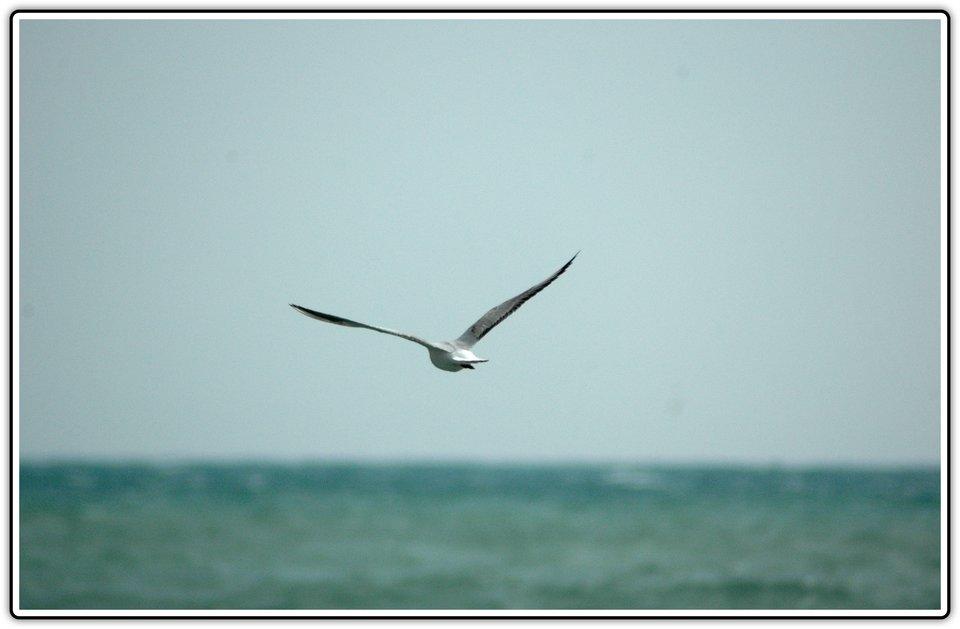 Fotografia przedstawiająca ptaka na tle horyzontu