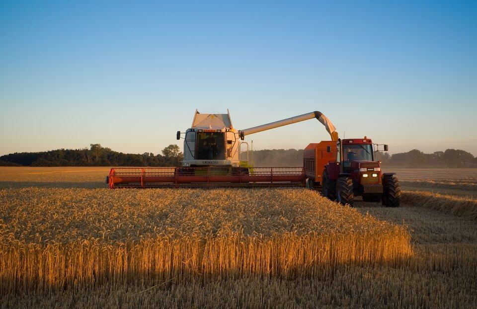 Na zdjęciu maszynowy zbiór pszenicy. Na pierwszym planie pole pszenicy, po którym jedzie kombajn zszerokim przyrządem żniwnym. Skoszone zboże trafia do rury, którą wyrzucane jest na jadący obok ciągnik.