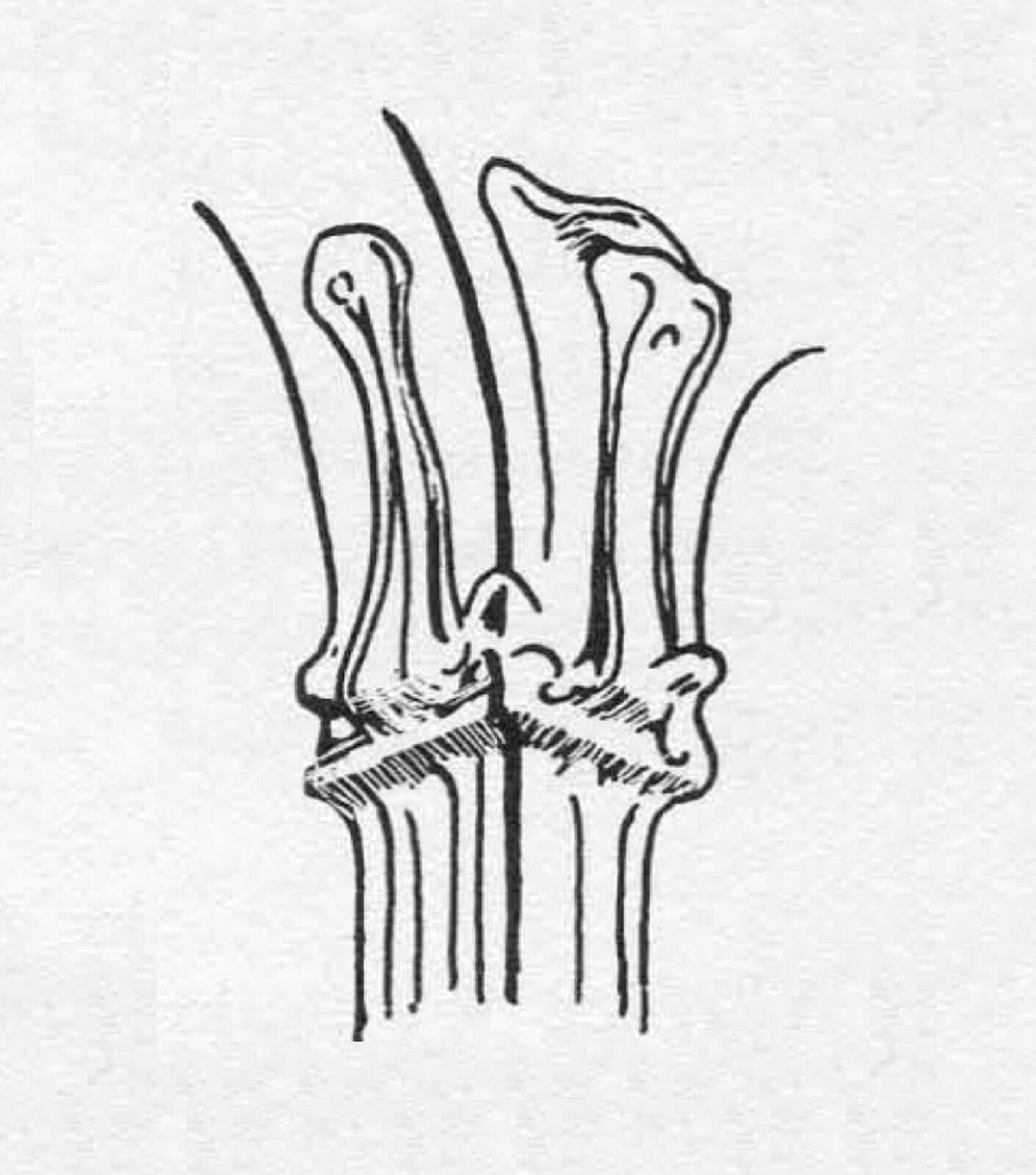 Ilustracja przedstawiająca szkic zprzykładową głowicą secesyjną. Przypomina wici roślinne opłynnym kształcie.