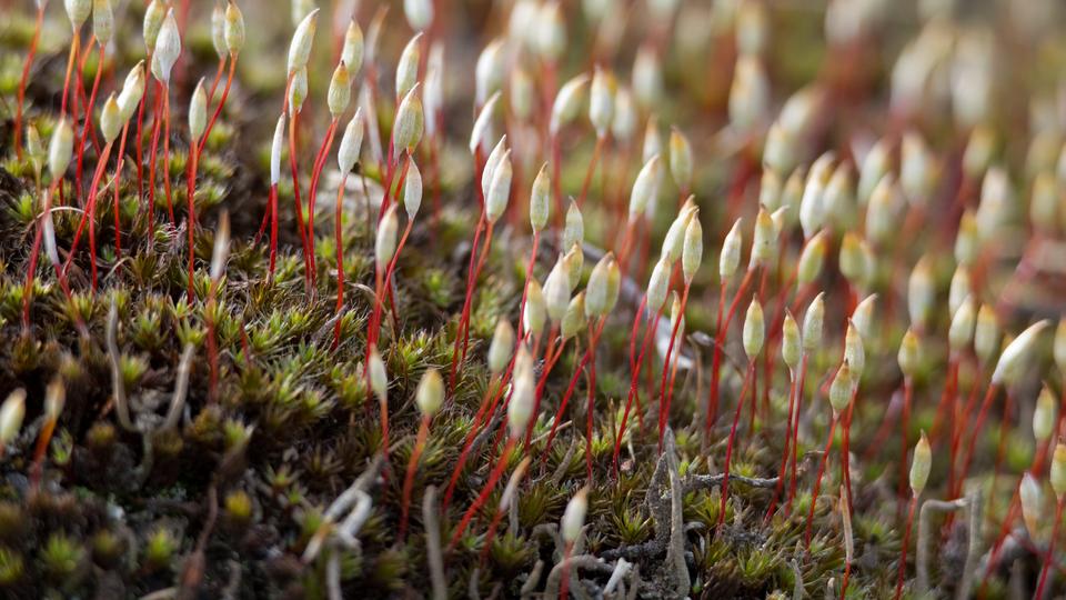 Jeśli korzystasz zczytnika ekranu NVDA, przełącz go wtryb formularza. Film prezentujący charakterystykę mchów, środowiska ich występowania oraz możliwości wykorzystania tych roślin przez człowieka.