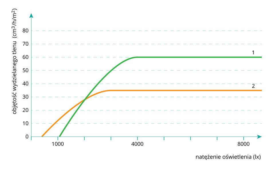 Ilustracja przdstawia wykres. Oś Y- natężenie fotosyntezy. Oś X- natężenie światła. Są 2 wykresy opisane jako 1 i2. Wykres1 osiąga wieksze wartości niż 2.