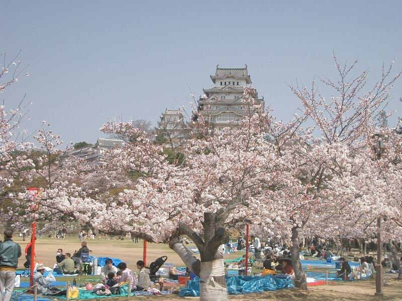 Hanami ustóp zamku Himeji Hanami ustóp zamku Himeji Źródło: Wikimedia Commons/Miya.m, licencja: CC BY-SA 3.0.