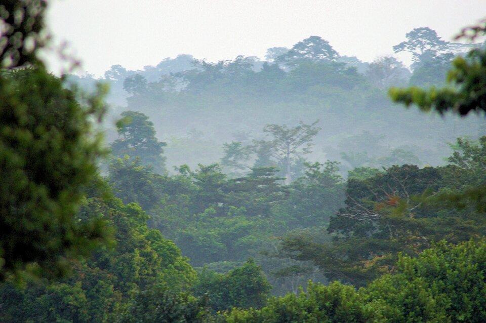 Na zdjęciu gęsty, wielopiętrowy, las równikowy, mgła.