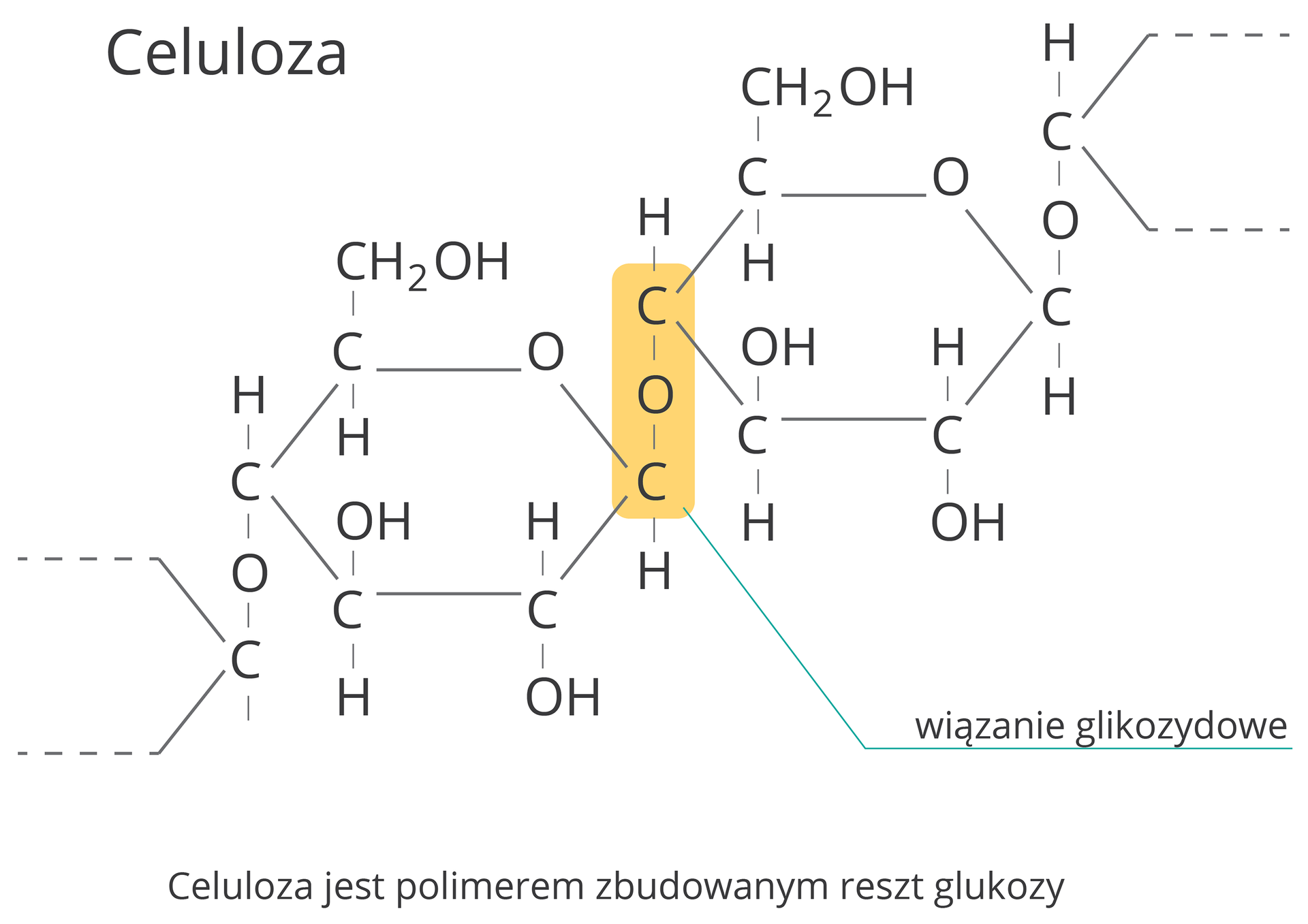 Celuloza jest polimerem zbudowanym reszt glukozy