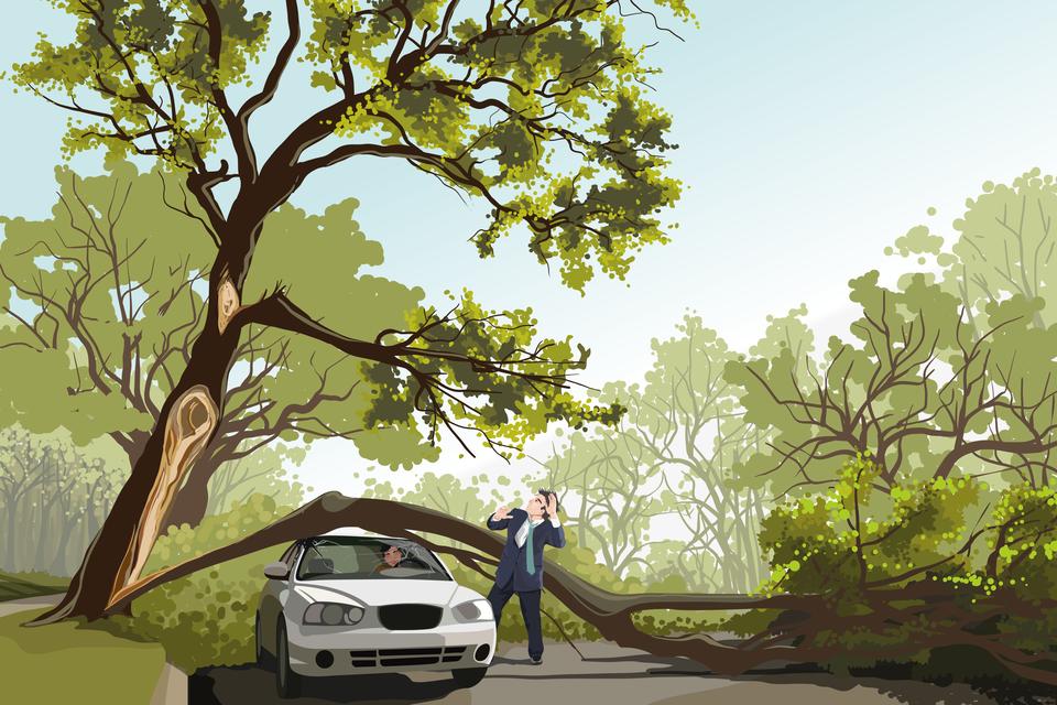 Rysunek przedstawia samochód przygnieciony przez złamany iprzewrócony pień drzewa zkierowcą wśrodku. Obok stoi świadek zdarzenia zobawą patrzący na przechyloną, ciągle jeszcze jednak stojącą drugą część pnia.