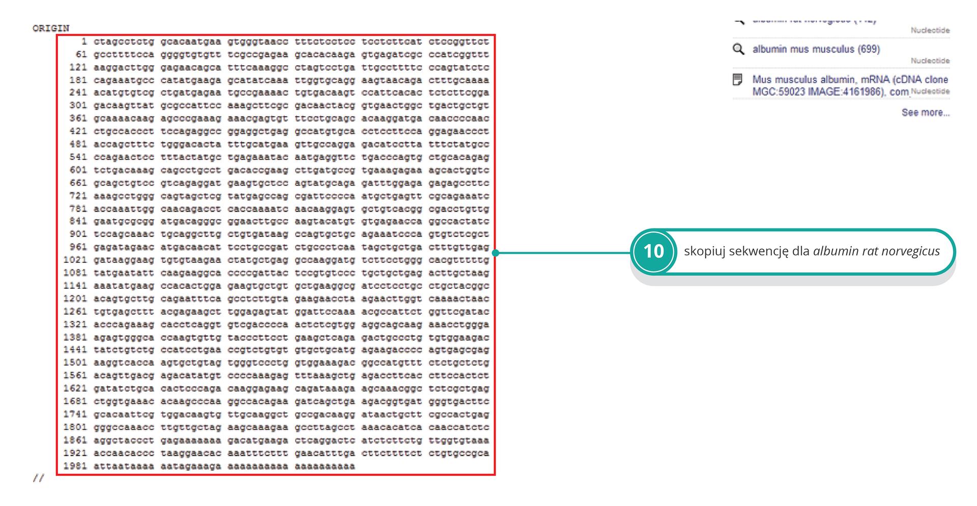 Ilustracja przedstawia sekwencję albuminy szczura do skopiowania. Ilustracja przedstawia miejsce wklejenia sekwencji białka szczura iprzycisk porównania obu sekwencji.