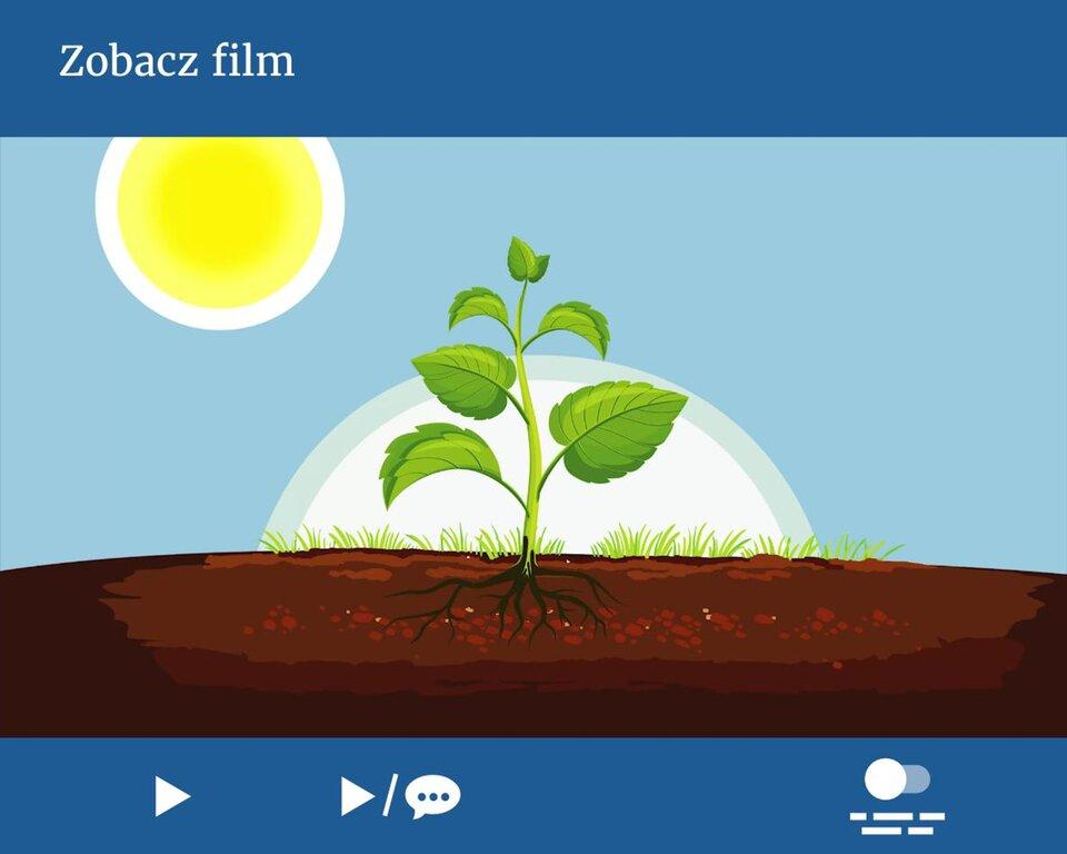 Jeśli korzystasz zczytnika ekranu NVDA, przełącz go wtryb formularza. Fotosynteza – czyli czym jest samożywność?