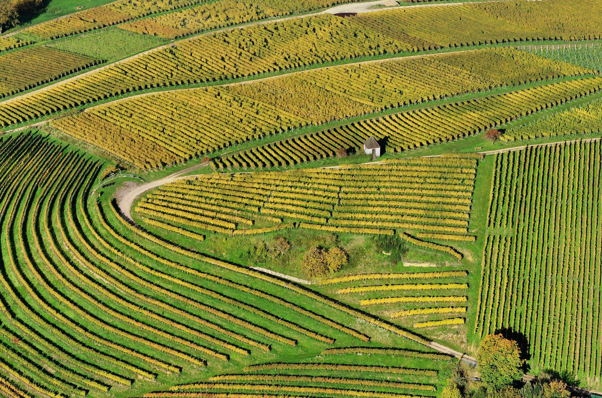 Winnice wMarkgräflerland wBadenii-Wirtembergii Winnice wMarkgräflerland wBadenii-Wirtembergii Źródło: Taxiarchos228, fotografia barwna, licencja: CC BY-SA 3.0.