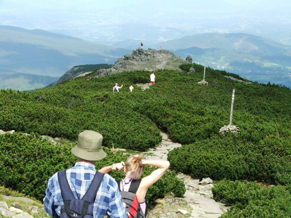 Na zdjęciu turyści wgórach na ścieżce pośród gęstej kosodrzewiny.
