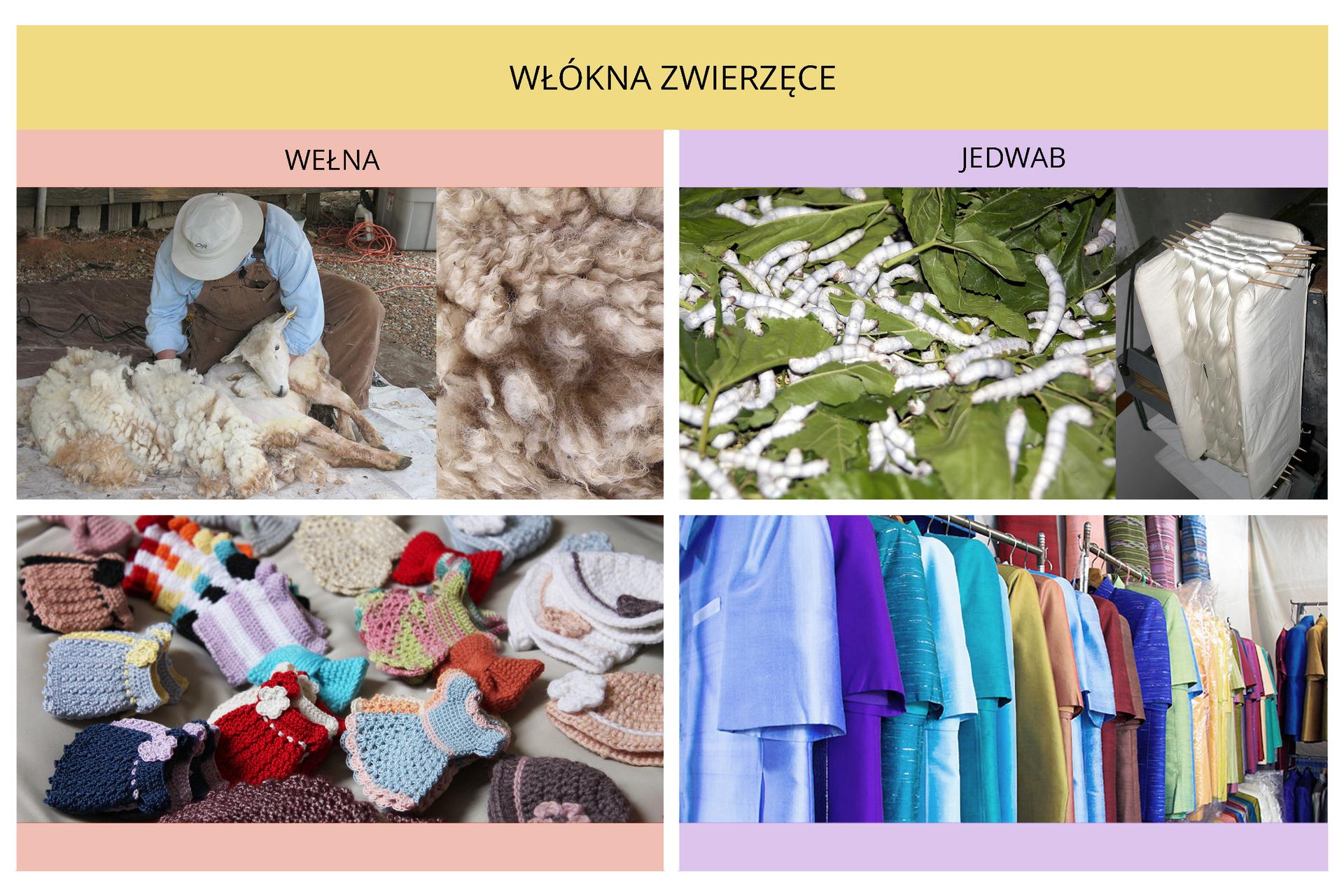 Dwa slajdy – infografiki. Na pierwszej włókna roślinne - zdjęcia roślin iproduktów znich wykonanych - bawełna, len, Sizal (sisal). Na drugiej włókna zwierzęce - wełna ijedwab.