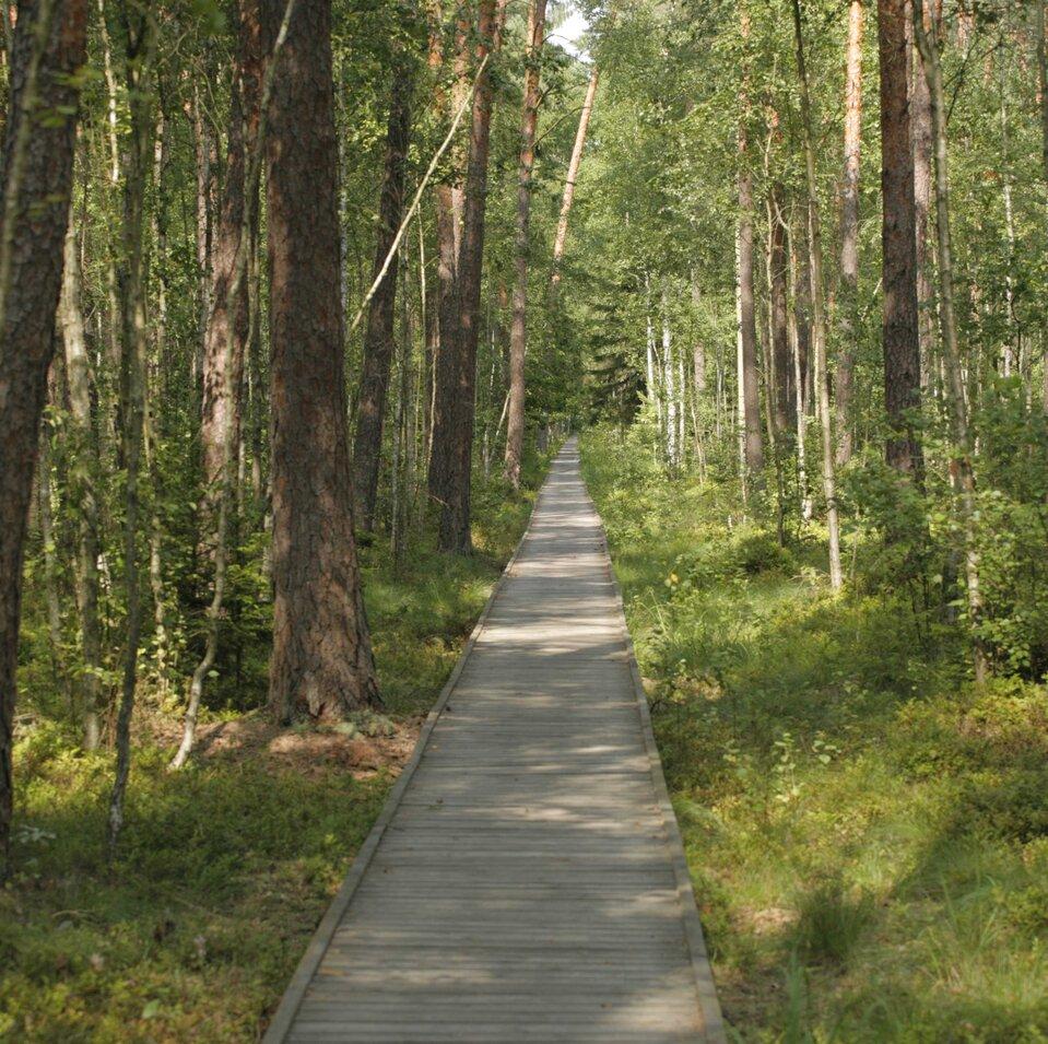 Panorama Biebrzański Park Narodowy