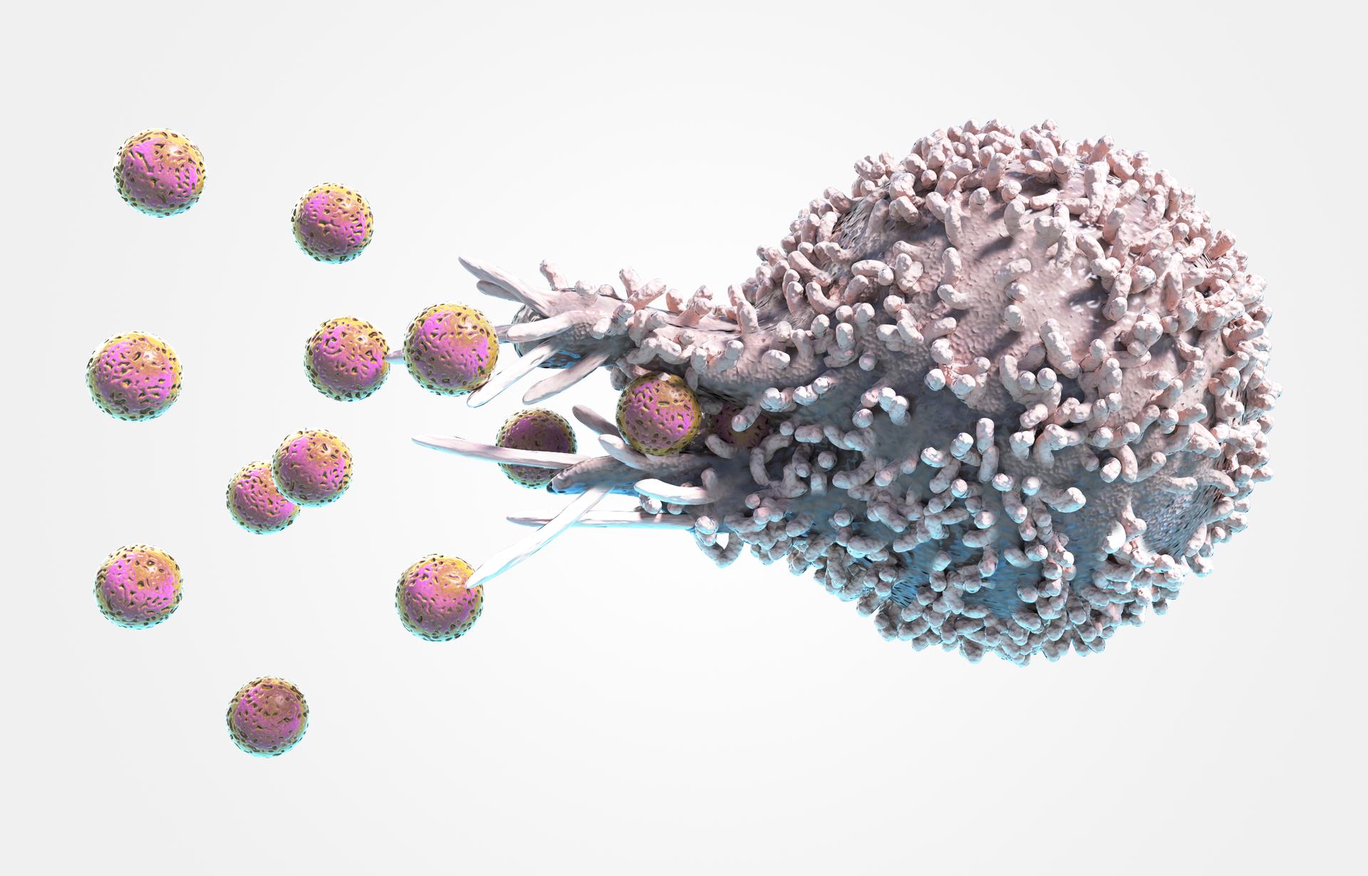 Ilustracja przedstawia schematycznie pożeranie bakterii przez makrofaga. Małe, różowe, nakrapiane kulki oznaczające bakterie są wchłaniane przez otwór wścianie dużego, liliowego makrofaga.