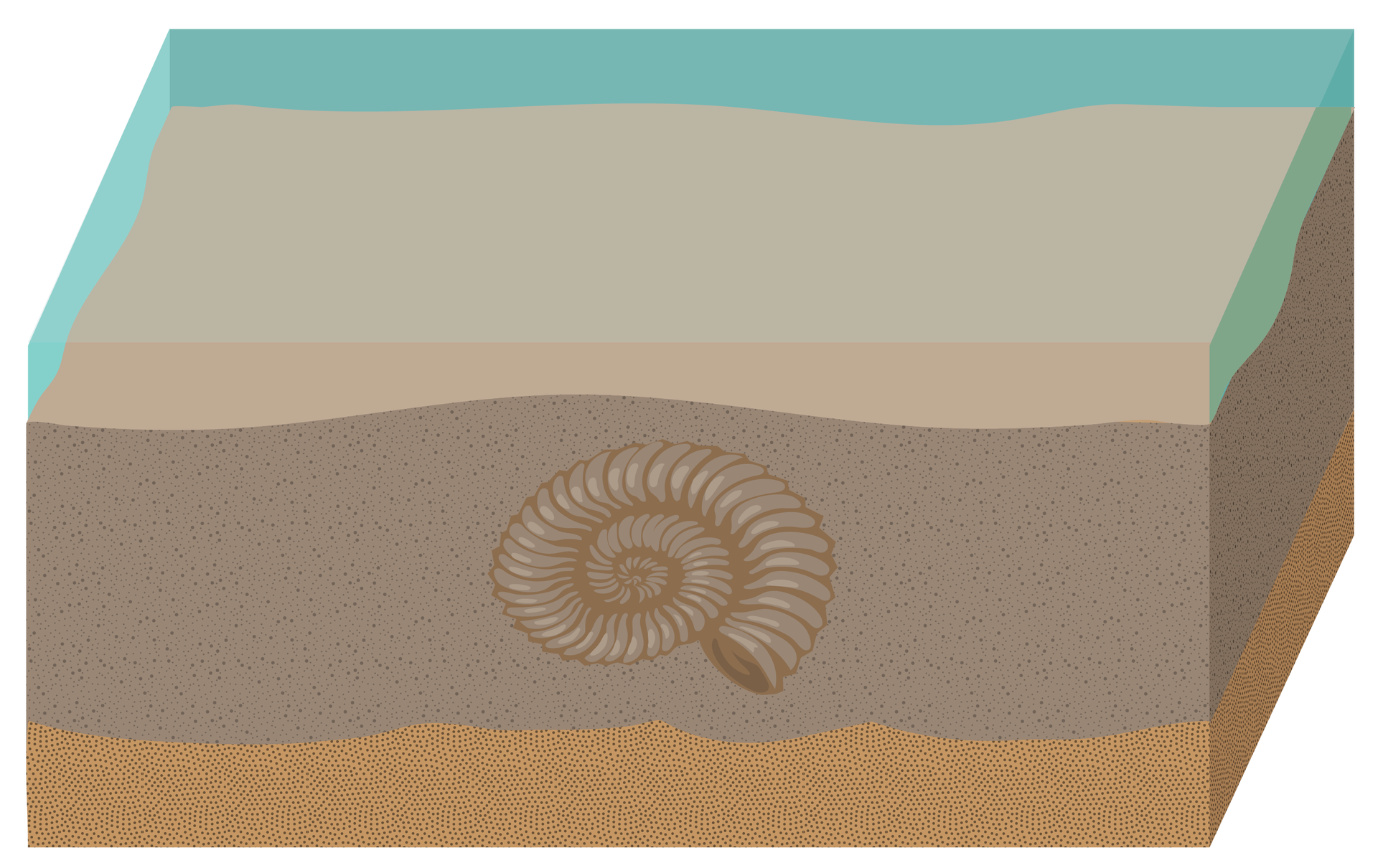Rysunek przedstawia wapienną muszlę amonita, zasypaną piaskiem ililiowymi osadami dennymi.